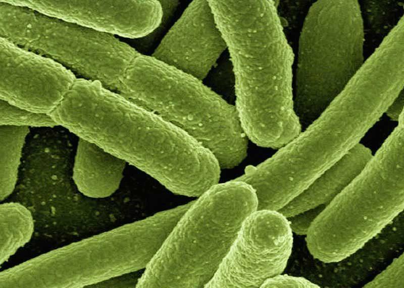 Casi di legionella a Busto Arsizio e i casi di infezione da Citrobacter a Verona